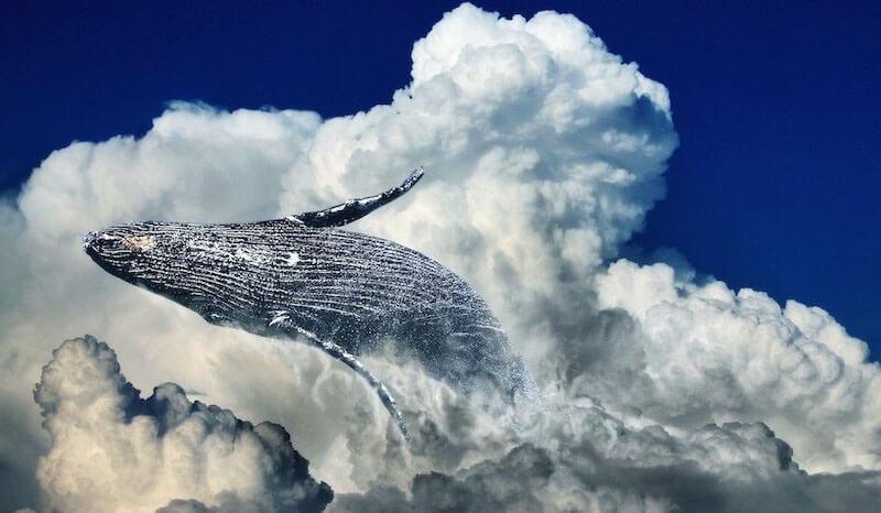 仮想通貨,クジラとは